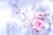 Beautiful pink roses in snow and frost in a winter park. Christmas artistic image. Selective and soft focus.