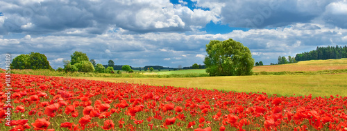 View of poppy filed in summer countryside