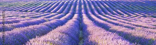 Plexiglas Lichtroze View of lavender field