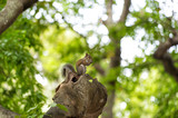 Squirrel animal sit on tree branch in wood - 183543669
