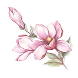 Image of blooming magnolia branch. Watercolor illustration - 183548200