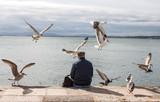 Homme nourissant  des mouettes dans le port de Lisbonne - 183548863