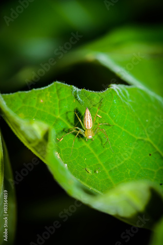 Macro spider select focus,Yellow head spider, Spider on a Leaves