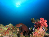 Underwater coral reef and octopus
