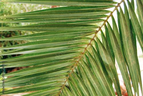 Fotobehang Marokko Green leaf close up background