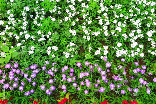 Papiers peints Vert 公園の花の風景17