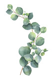 Watercolor vector wreath with green eucalyptus leaves and branches. - 183572883