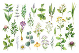 Hand drawn vector watercolor set of herbs, wildflowers and spices. - 183573035