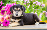 Puppy sits next to a basket of flowers in the garden - 183574251
