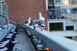 Seagulls at the ballpark - 183576682