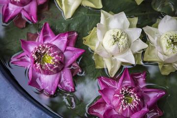 Lotus flower floating on water
