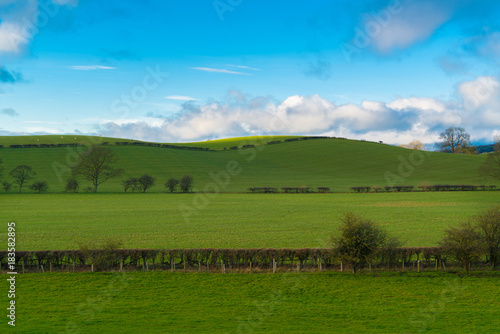 Foto op Canvas Gras Green field and blue sky