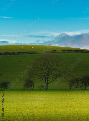 Fotobehang Blauw Green field and blue sky