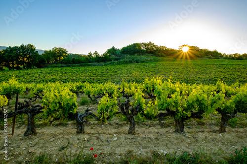 Fotobehang Wijngaard Lever de soleil sur le vignoble.