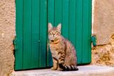 Joli chat tigré assis devant la porte verte dans un village de Provence.