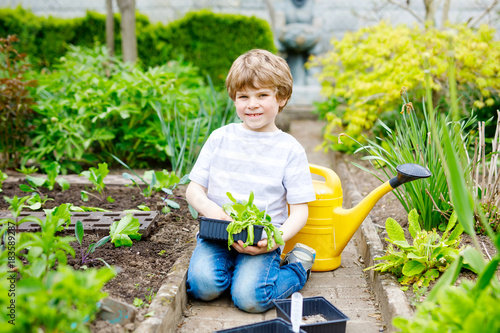Cute little preschool kid boy planting green salad seedlings in spring Poster