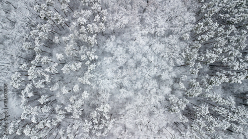 View of the snow-covered pines in the forest, top view