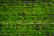 Green moss growing on old brick wall, Evergreen green moss at primitive forest