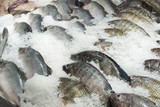 Fresh tilapia fish on ice in the market - 183636259