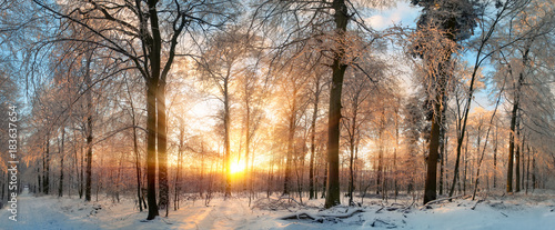 Leinwandbild Motiv Winter Landschaft: Zauberhafter Sonnenuntergang im Wald