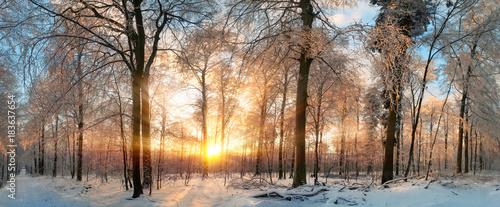 Foto Murales Winter Landschaft: Zauberhafter Sonnenuntergang im Wald
