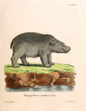 Illustration of a Hippo - 183640410