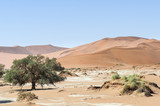 Dunes with acacia trees in the Namib desert / Dunes with acacia trees in the Namib desert, Namibia, Africa. - 183644690