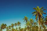 Palm tree - 183678857