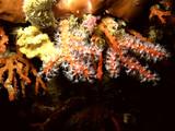 Reef Mediterranean - 183682693