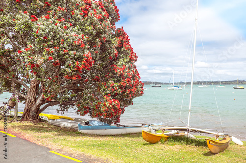 Traditional kiwi summer beach with flowering red Pohutukaka tree, sea and boats - in Russell, Bay of Islands, Northland, New Zealand, NZ