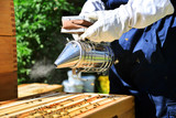 Portrait of beekeeper using a smoker to calm down the bees. Beekeeping on sunny day. - 183690461