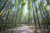 Bamboo Forest in Arashiyama, Kyoto - 183702213