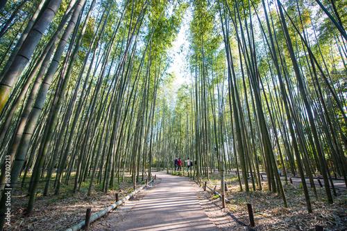 Staande foto Weg in bos Bamboo Forest in Arashiyama, Kyoto