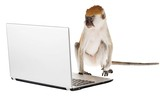 Monkey Using a Laptop Computer - 183708420