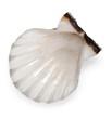 Seashell Isolated