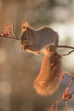 squirrel in sun on branch looking down