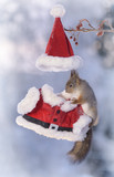 squirrel hanging at Santa clothing - 183711407