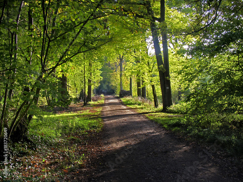 In de dag Weg in bos paysage automnale