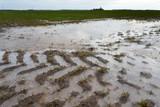 Frozen water on wet wheat field in late autumn. - 183721801