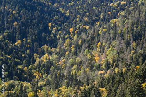 Papiers peints Bosquet de bouleaux view from top of yellow forest in the fall