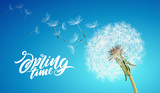 Beautiful vector dandelion with flying seeds on cloudy sky