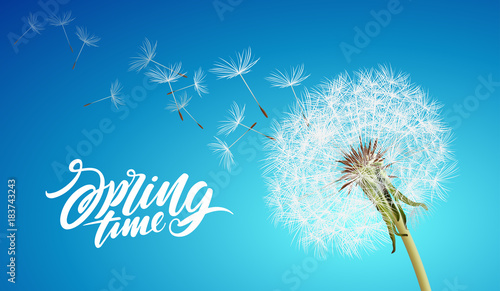 Fototapeta Beautiful vector dandelion with flying seeds on cloudy sky