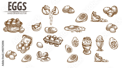 Digital vector detailed line art eggs in wooden
