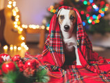 Dog under a christmas tree
