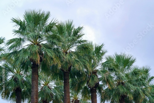 big green palm trees