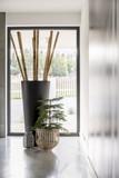 Bambus poles in big vase