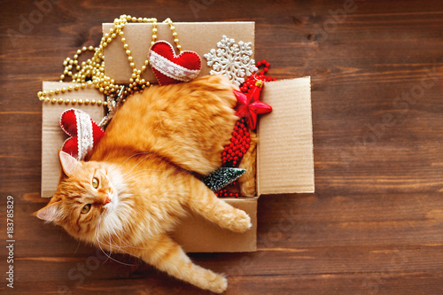 Plexiglas Kat Ginger cat lies in box with Christmas and New Year decorations on wooden background. Fluffy pet is doing to sleep there.