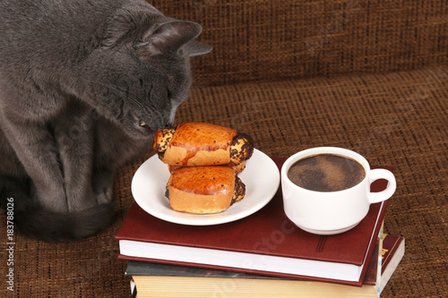 Staande foto Klaprozen grey cat smells the rolls with poppy seeds near the coffee Cup