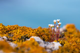 blooming flowers in a spring field - selective focus - 183793430