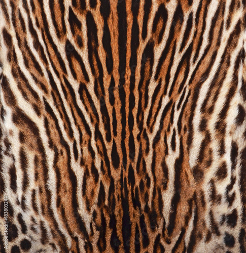 Fototapeta leopard texture background